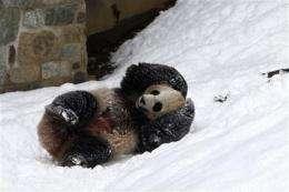 Pandas leave DC, Atlanta for new homes in China (AP)