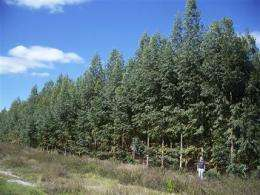 Paper industry tests genetically altered trees (AP)