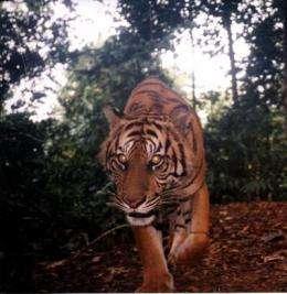 Photo album tells story of wildlife decline
