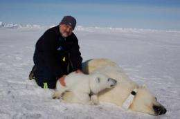 Polar bears no longer on 'thin ice': researchers say polar bears could face brighter future