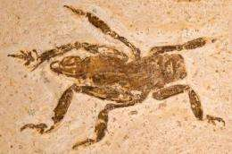 Rare insect fossil reveals 100 million years of evolutionary stasis