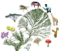 Reading the signs: Plants and animals found common ground in response to microbial threats