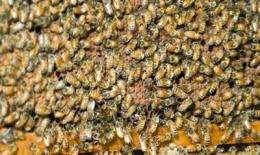 Robots imitate honey bees for aircraft aerobatics