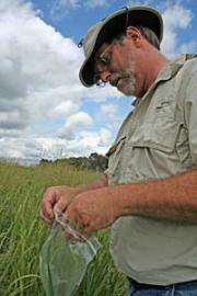 SDSU scientists 're-discover' switchgrass moth