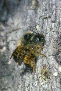 Secret life of bees now a little less secret