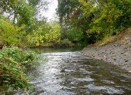 Storm runoff and sewage treatment outflow contaminated with household pesticides