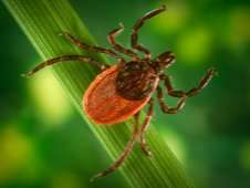 Students Use Satellites to Check for Ticks