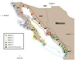 Study finds common ground for ecosystems and fishing in Northwest Mexico
