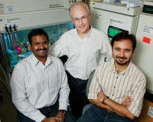 Team finds link between stomach-cancer bug and cancer-promoting factor