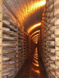 Tequila and cheese offer lessons for rural economies in developing world