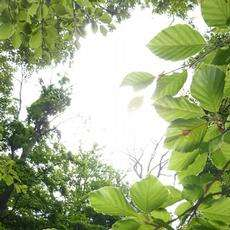 The forest paradox during heatwaves