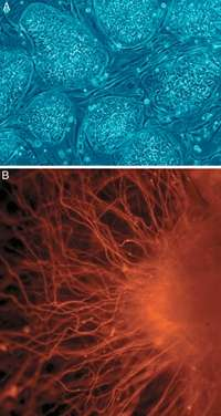 The next generation of stem cells