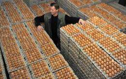 Theodor Meyer stands between packages of eggs on his chicken farm in Emstek