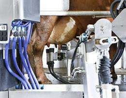 The revolution of dairy farming with automatic milking machines