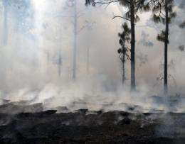 The secret life of smoke in fostering rebirth and renewal of burned landscape