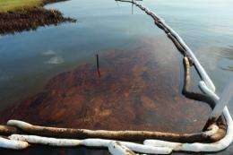 The spill has impacted 59 miles (95 kilometers) of Gulf Coast shoreline, mainly in Louisiana