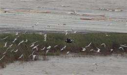 This oil spill 'the bad one' -- recipe for disaster
