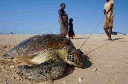 Thousands of turtles captured in Madagascar despite ban