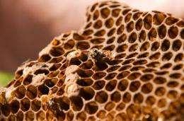 Three of Britain's 25 bumblebee species are now extinct