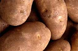 Tough New Spuds Take on Double Trouble