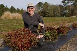 UF researchers identifying, developing noninvasive ornamental plant varieties