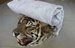 Wildlife group targets Myanmar-China tiger trade (AP)