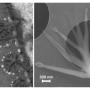 carbonyl olefin metathesis X-mol提供的期刊论文更新,angewandte chemie international edition——brønsted acid‐catalyzed carbonyl‐olefin metathesis inside a self‐assembled.