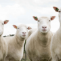 british scientist stunned the world by cloning a lamb Unlike most editing & proofreading services, we edit for everything: grammar, spelling, punctuation, idea flow, sentence structure, & more get started now.