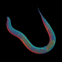 Scientists sequence asexual tiny worm—whose lineage stretches back 18 million years