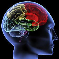 Neurosciences on the Internet