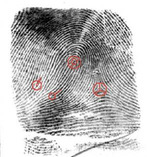 Using Minutiae To Match Fingerprints Can Be Accurate