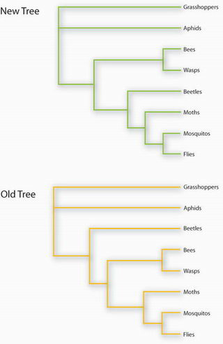 new genetic analysis forces re draw of insect family tree