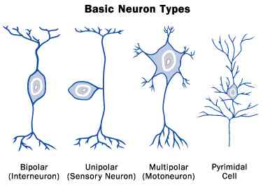 How Many Types Of Neurons Do We Need To Define