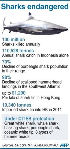 Graphic on endangered shark species. A conservation victory ...