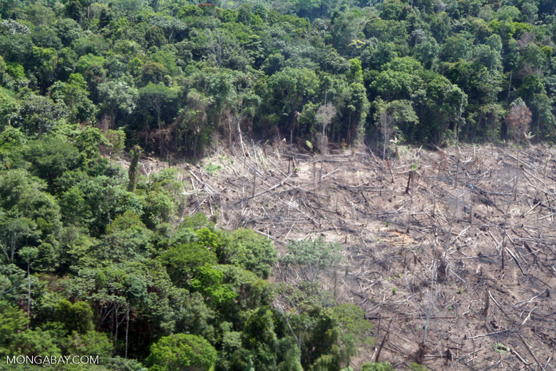 rainforests could transition to savannah-like states in response ...