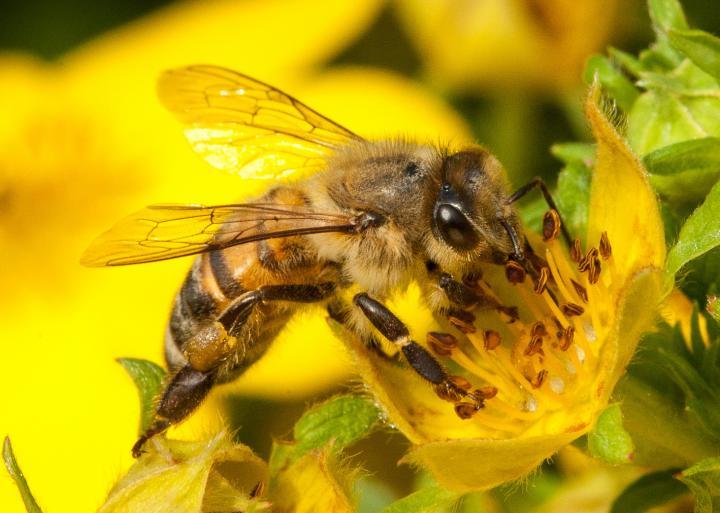 Bees baby - Villa mirage resort scottsdale