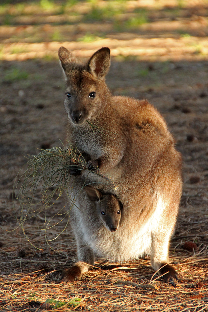 are all right with kangaroos