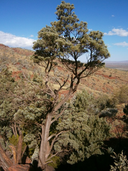 Tree Rings Denote Century Old Weather Patterns