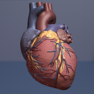 Stem Cells Show Promise For Treating >> Stem Cell Patch Shows Early Promise In Treating Heart Failure