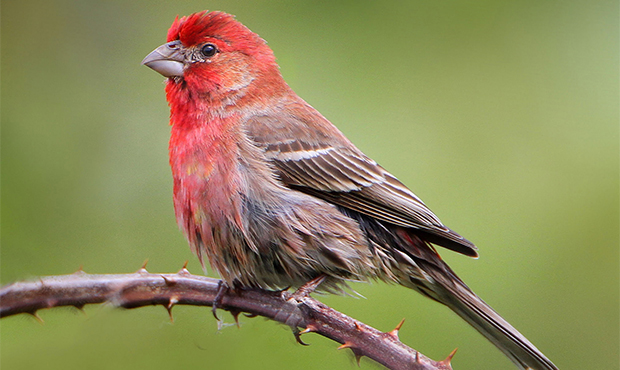 How birds unlock their super-sense, ultraviolet vision