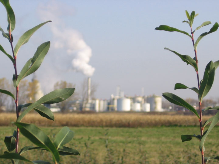 Can pollution help trees fight infection for Pollution fighting plants