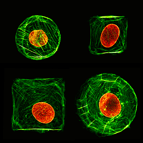 the discovery and news about the cell nucleus Find the nuclei in divergent images to advance medical discovery  30 trillion  cells contain a nucleus full of dna, the genetic code that programs each cell   drug testing, shortening the 10 years it takes for each new drug to come to market.