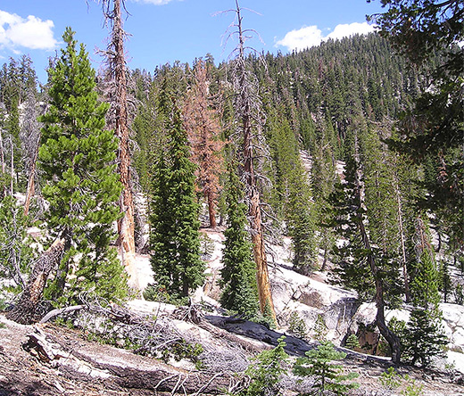 And Climate Change Fuel Highelevation California Fires Study Finds - Higher elevation