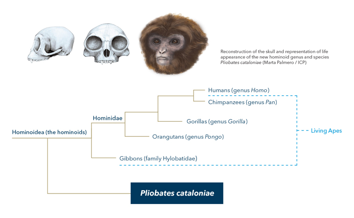 An Analysis of Primate Species Profile