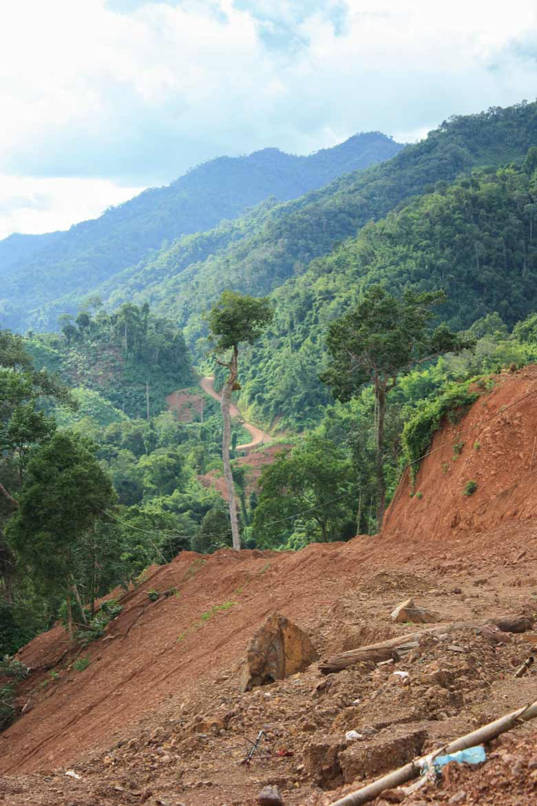 project shows how fragmentation harms forests u0026 39  ability to
