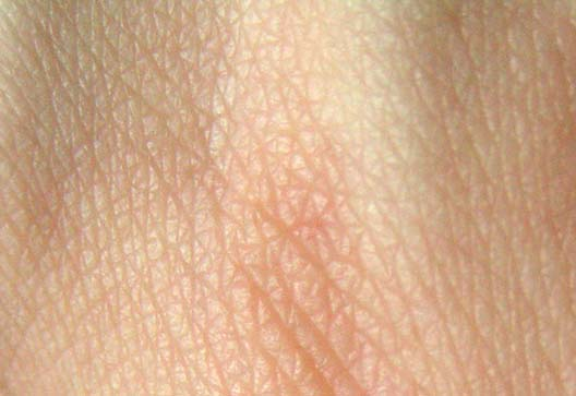 How skin begins: New research could improve skin grafts, and more