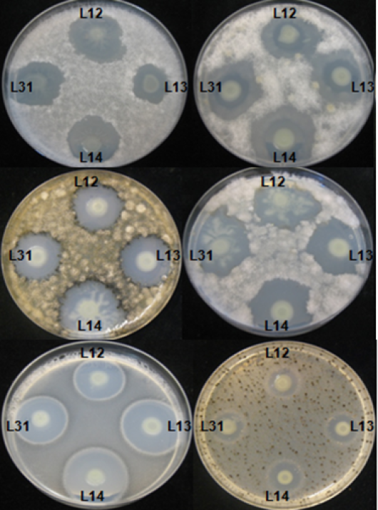 antimicrobial properties of soil used in Antibacterial activity of subterranean termites used in south their mounds and nearby soil extracts collected from three antimicrobial properties of.