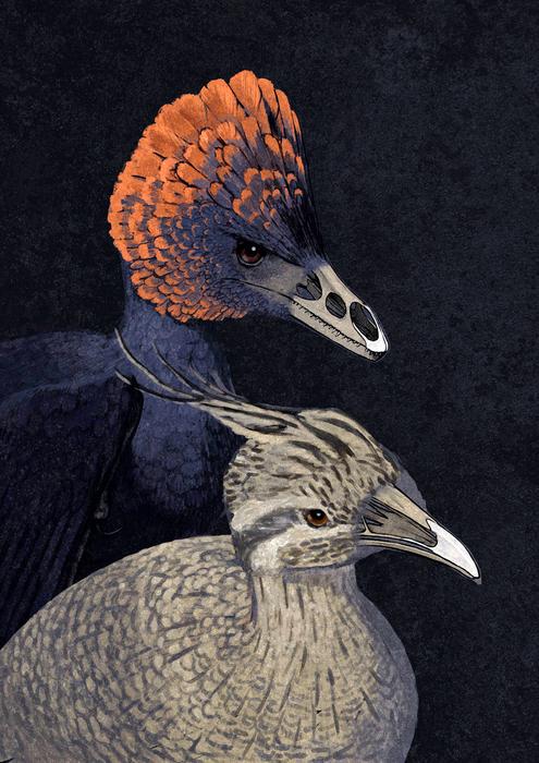 Tweaking the beak: Retracing the bird\'s beak to its dinosaur origins ...