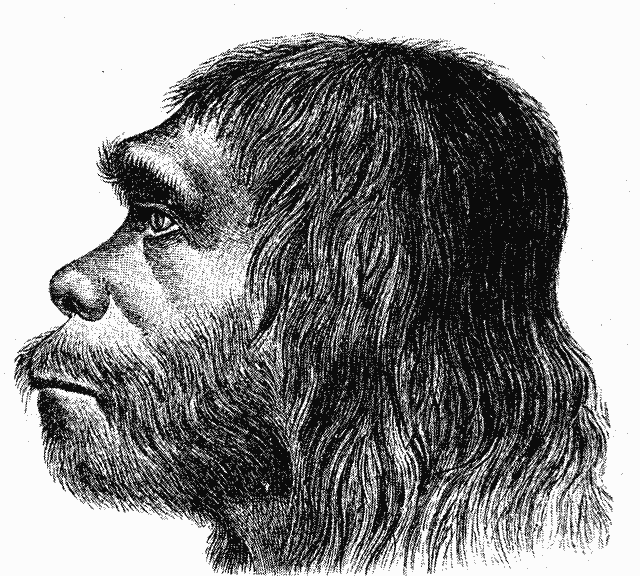 1 neanderthal