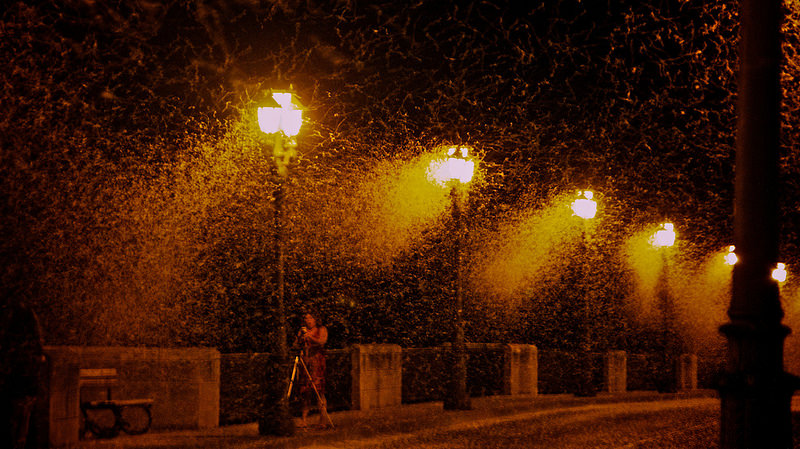 Attraction To Street Lamps In Tudela Spain Credit Oiluj Samall Zeid